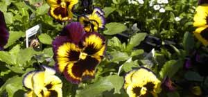Village Gardens Greenhouse