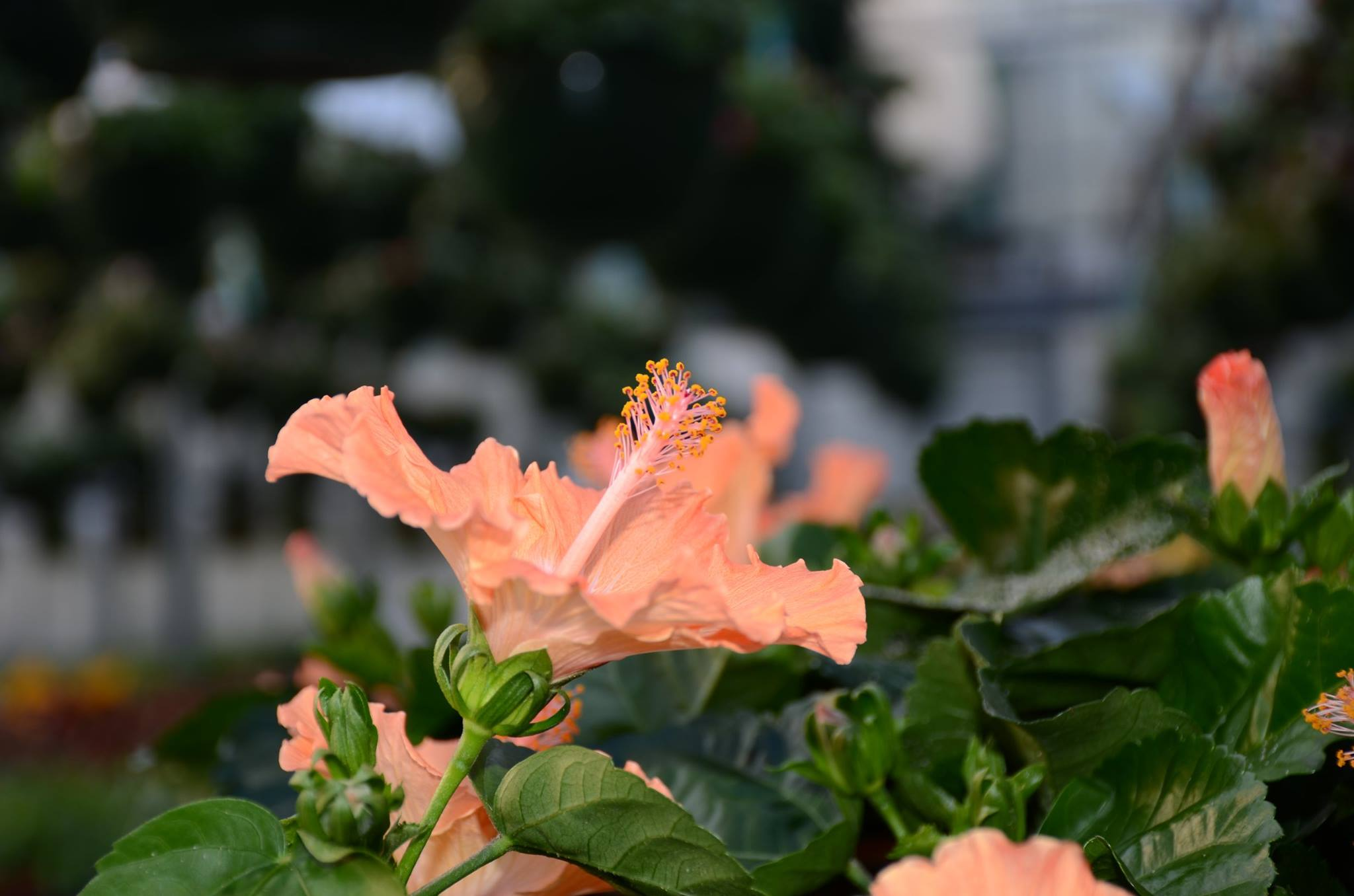 Greenhouse Flowers In Bloom
