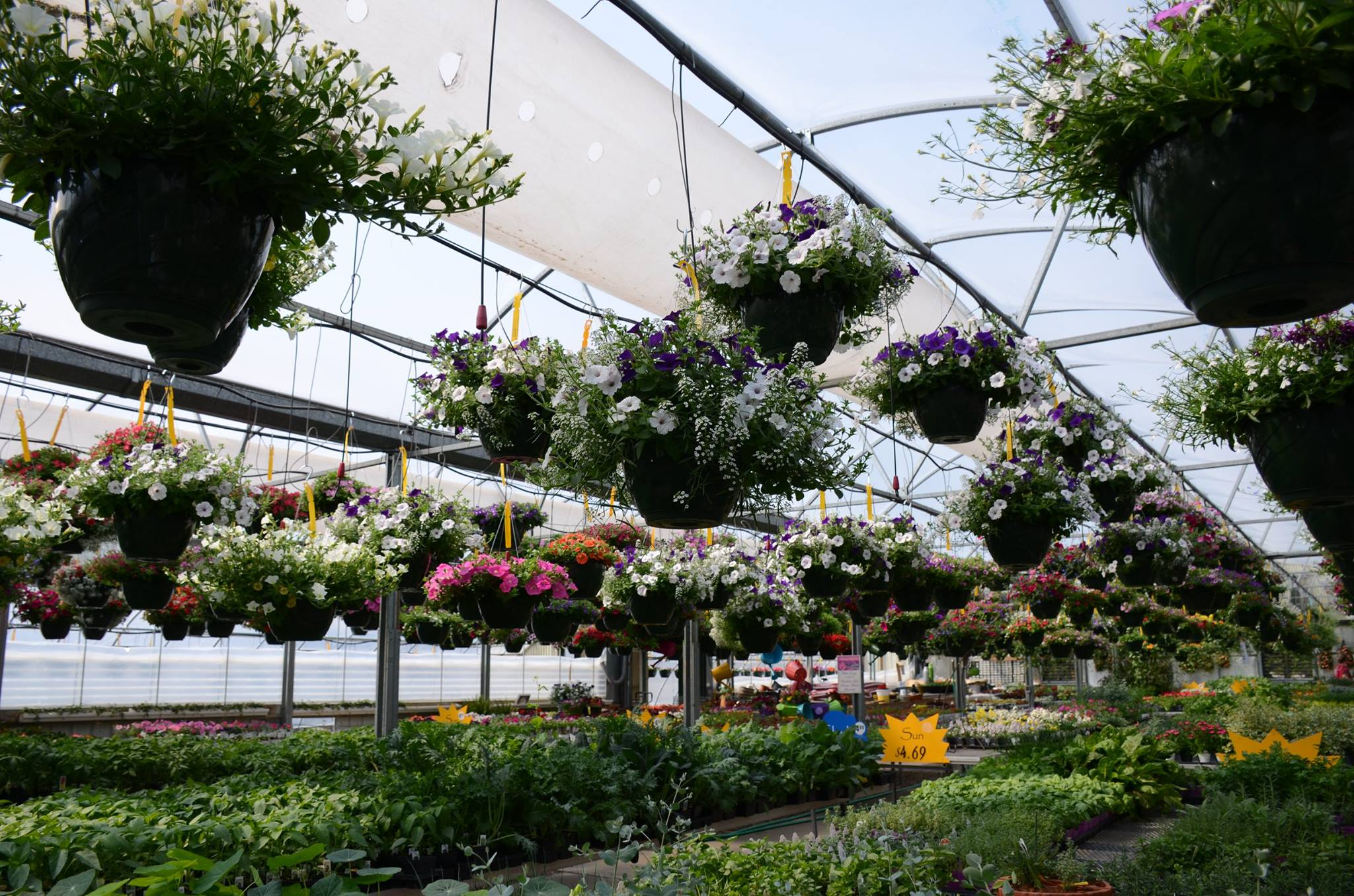 Greenhouse Hanging Baskets and Benches