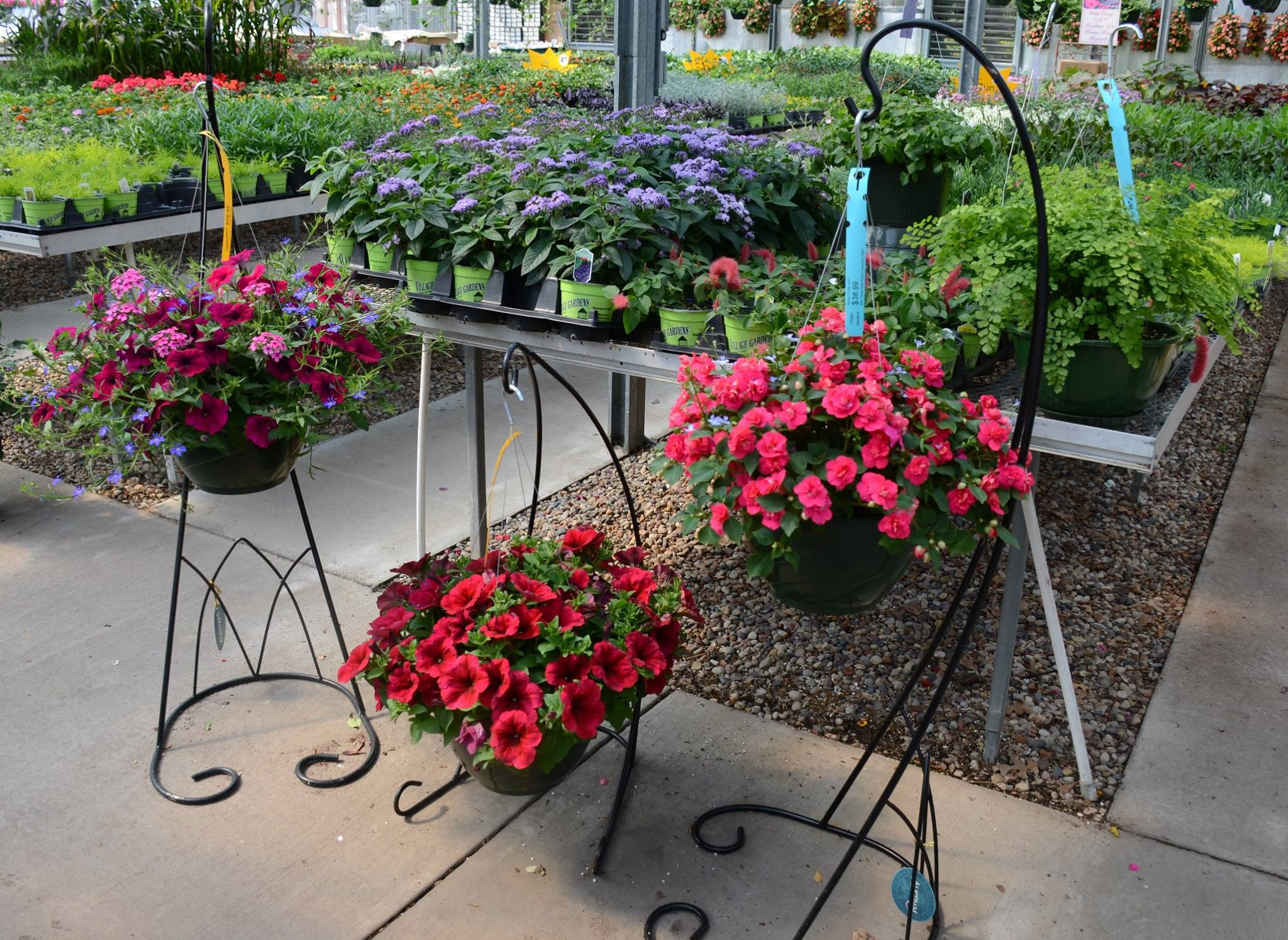 Greenhouse Hanging Baskets