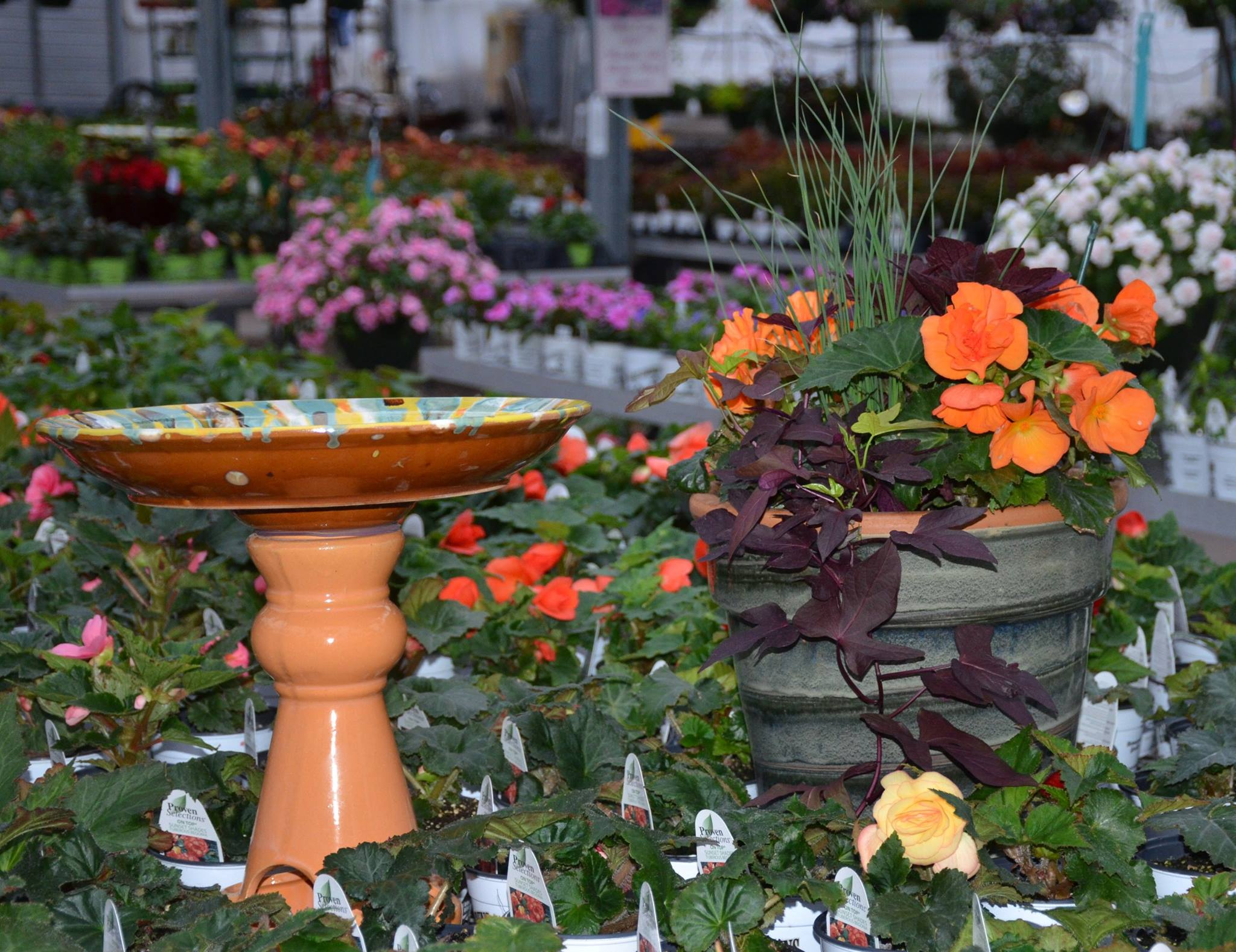 Greenhouse Plants and Bird Bath